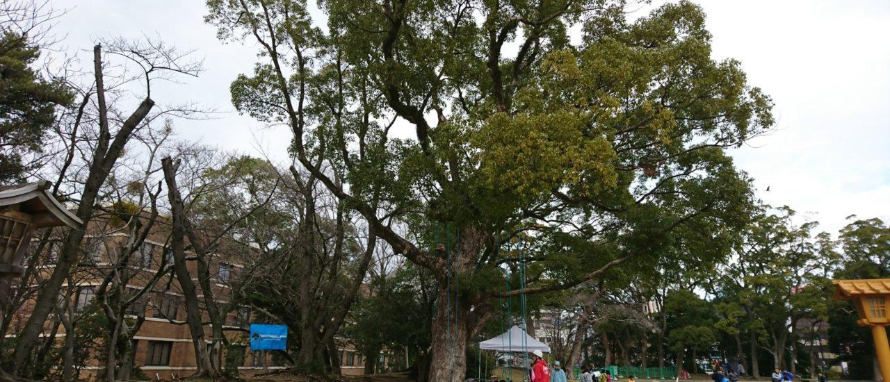 体験会in舞鶴公園